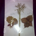 DIY Tree and Butterflies from Dried Leaves